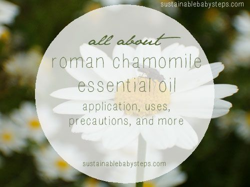 Learn how to use roman chamomile essential oil to support the nervous system, emotions, skin health, and more, via SustainableBabySteps.com
