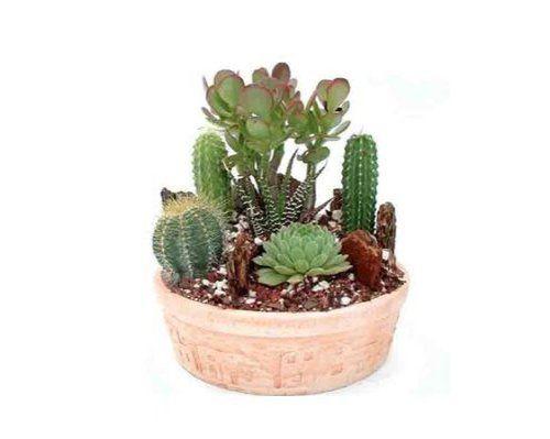 Cactus Garden Small   Green Gift that Ships Via 2-Day Air! GivingPlants http://www.amazon.com/dp/B003ZW6W8E/ref=cm_sw_r_pi_dp_x4X7wb0S1JECS