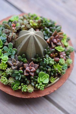 Succulents. #roots