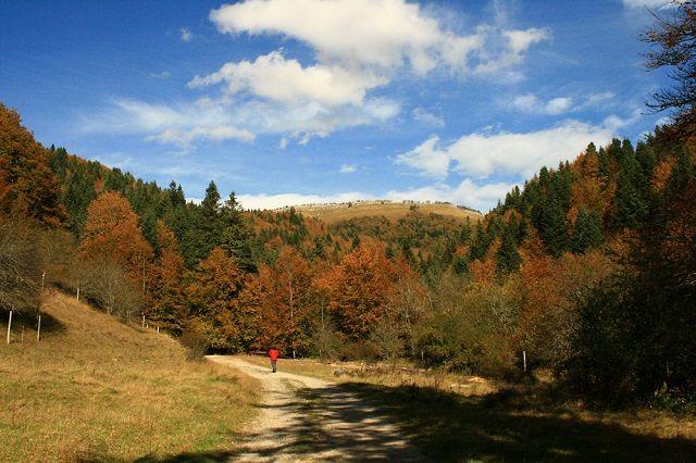 Paisajes de Navarra. La Selva de Irati es un valioso ecosistema de gran belleza donde podrás disfrutar de la explosión de los colores del otoño