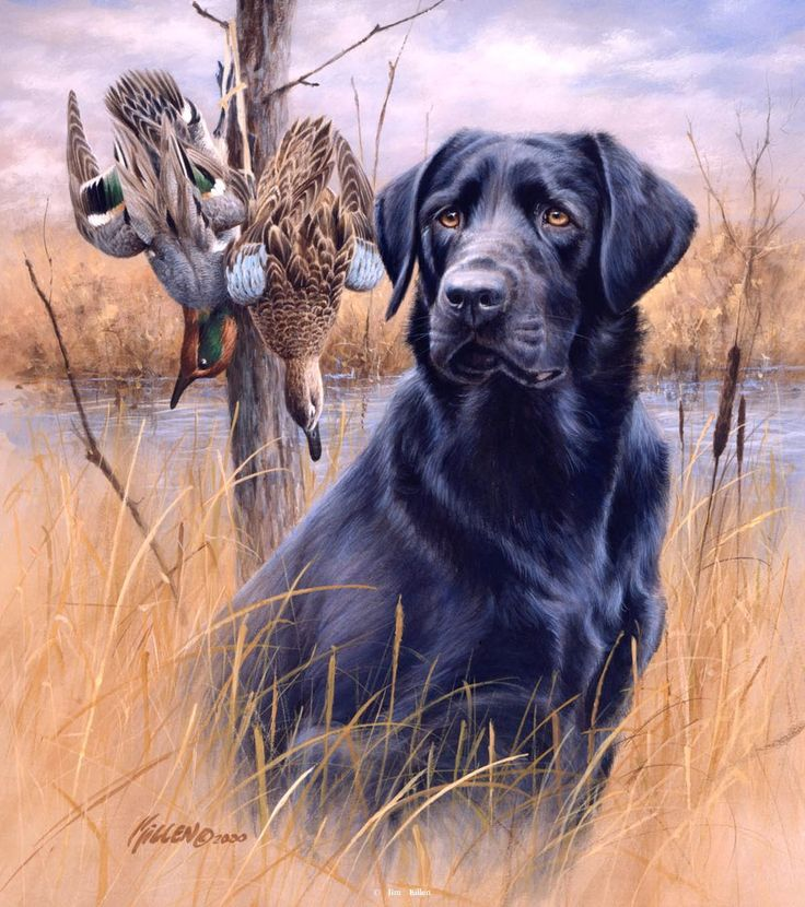 Pix For Gt Black Lab Duck Hunting Painting Art Oil