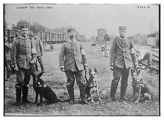 German Shepherds Red Cross Dog 1909 Germany by InterestingPhotos, $7.95