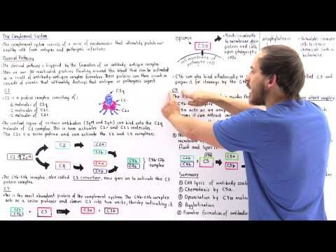 Classical Pathway of Complement System - YouTube