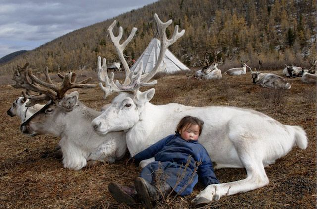 Photographer Hamid Sardar-Afkhami captured fascinating images of reindeer people living in Mongolia.