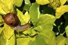 Pesticidi naturali e fai-da-te per annientare gli ospiti sgraditi del tuo giardino