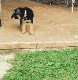 — 4gifs: Puppy's first encounter with a step