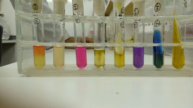 Provas bioquímicas Klebsiella pneumoniae