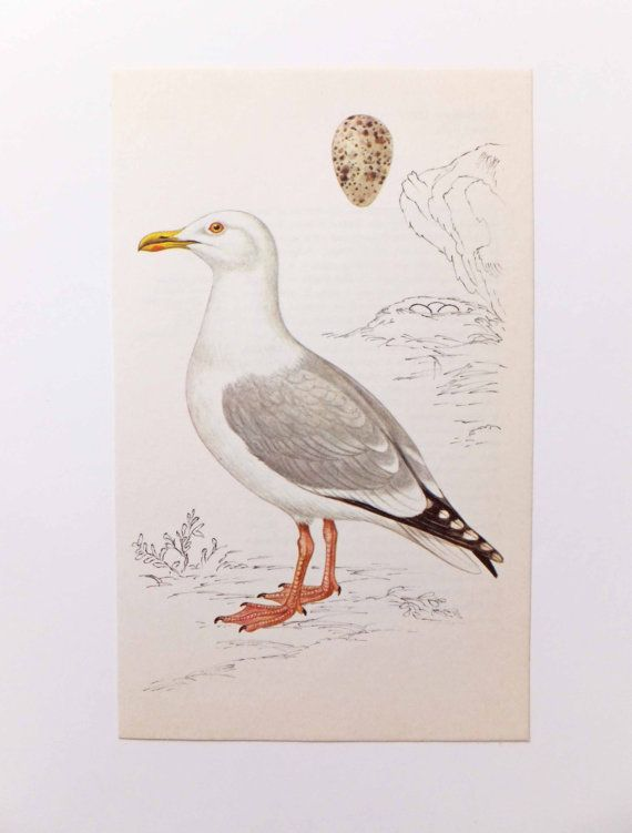 Herring Gull Picture Seaside Decoration  by PeonyandThistlePaper, £4.00