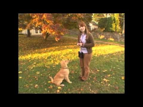 How to Teach Your dog the Come Command (Basic)