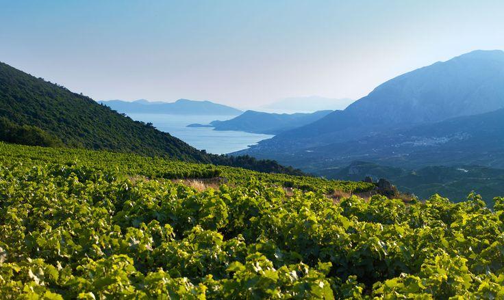 Der griechische Weinberg als atemberaubender Arbeitsplatz der Winzer!