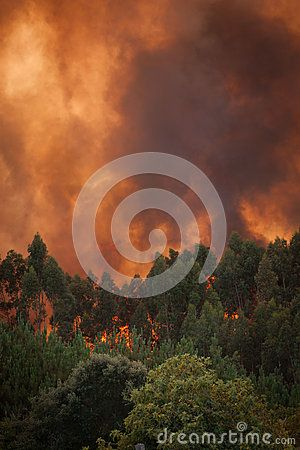 Forest Wild fire detail on Portugal Summer