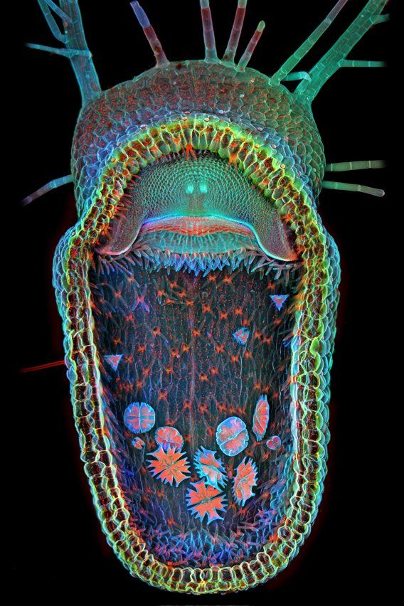 Igor Siwanowicz, a neurobiologist, took first place with this picture showing the open trap of an aquatic carnivorous plant known as the humped bladderwort. You can see several single-celled green algae inside the plant.