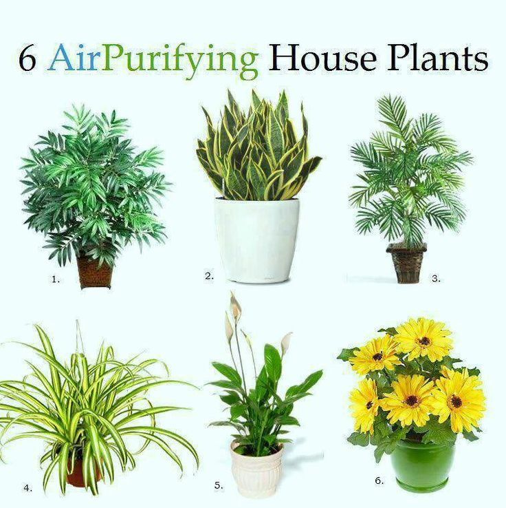 1. Bamboo Palm: Removes formaldahyde and acts as a natural humidifier.  2. Snake Plant: Absorbs nitrogen oxides and formaldahyde.  3. Areca Palm: Purifies the air and keeps it clean.  4. Spider Plant: Removes carbon monoxide, formaldahyde and other toxins or impurities from the air.  5. Peace Lily: Removes mold spores (best place for this plant is in bathrooms or laundry rooms). Also removes formaldahyde and trichloroethylene.  6. Gerbera Daisy: Removes benzene from the air and improves…