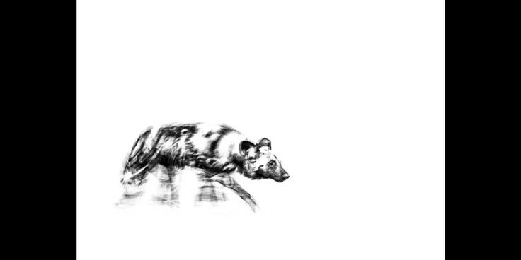 Black and white fine art print of an African wild dog on the move