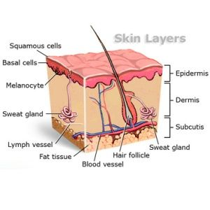 "A great ""inside"" look at your skin!"
