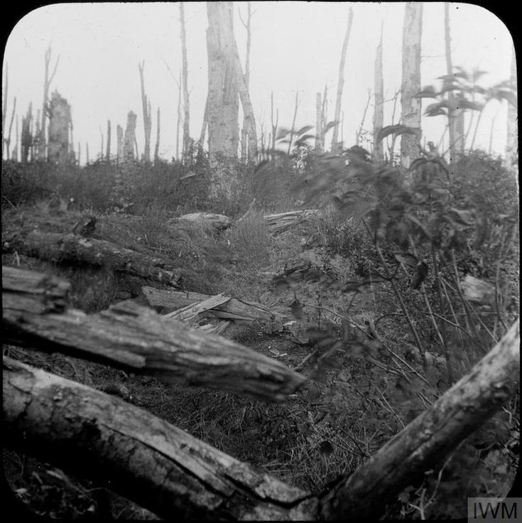 WWI, Shell damaged trees in Oppy Wood, Oct 1919. Pilgrimage to the Western Front ©IWM HU 109151