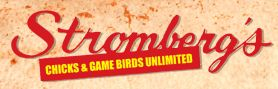Broiler Chickens, Meat Chickens for Sale, Chickens for Meat, Broilers Chickens | Meat Producing Chickens | Chicks and Game Birds from Stromberg's |
