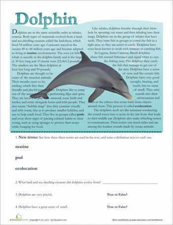 25 best ideas about dolphin facts for kids on pinterest dolphin craft dolphin art and. Black Bedroom Furniture Sets. Home Design Ideas