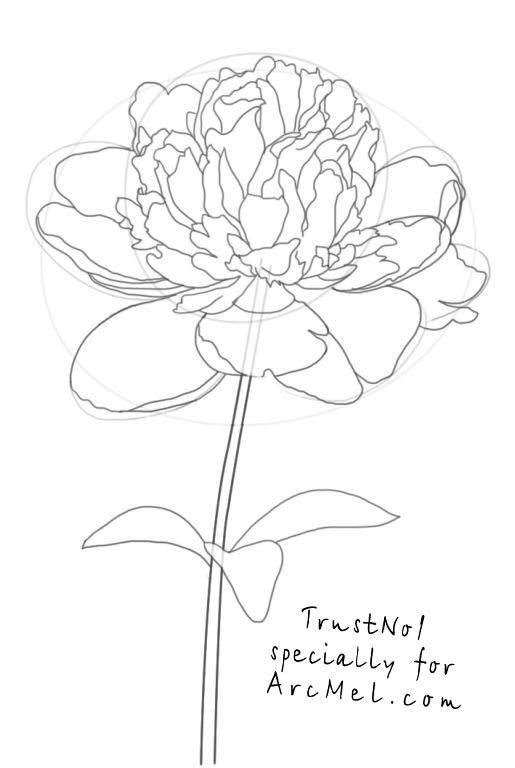How to draw a peony step 4