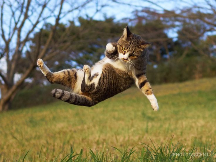 For More Cat Food Click Here http://moneybuds.com/Cat/
