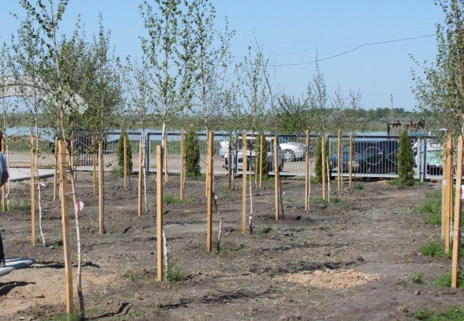 Посадка деревьев http://bazainformatsionnaya.ru/usefulinformation.ru/posadka-derevev/  Посадка и уход за деревьями В этой статье мы расскажем вам, как подбирать деревья, сажать их и ухаживать за ними. Посадка деревьев создает естественную среду обитания и этим помогает сохранять окружающую среду и животный мир.  Однако прежде чем заняться посадкой деревьев, вы должны четко представить себе, сколько для этого понадобится сил и времени. Вы […]