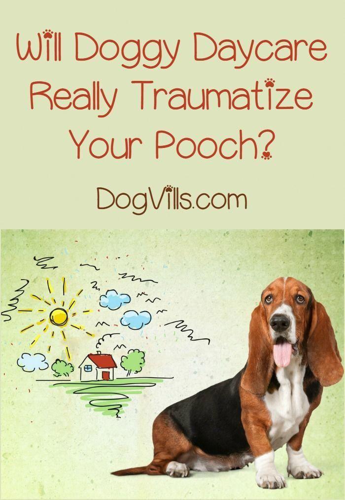 Euthanasia Dog Low Cost #CanDogsEatMango | Dog Treat Recipes | Dogs
