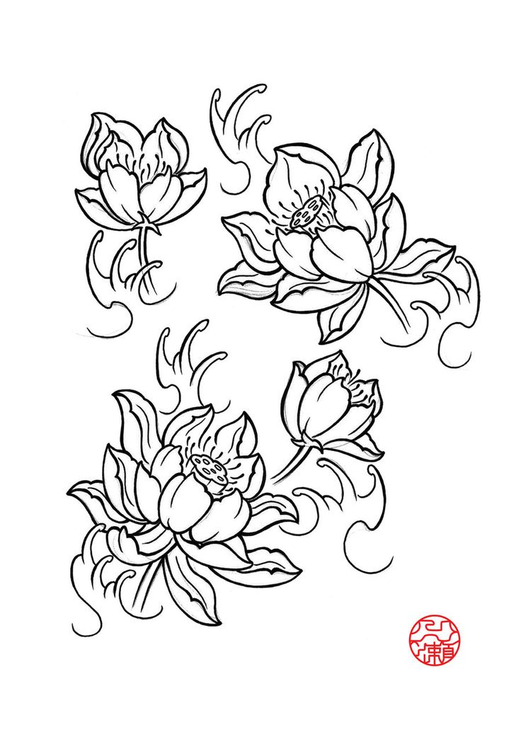Chinese Flower Line Drawing : Lotus flower drawings for tattoos by