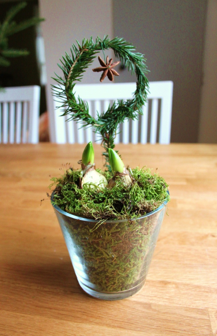 Julgrupp med hyacinter.