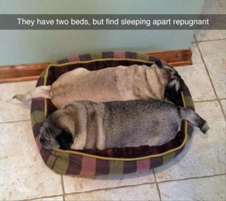 A Clone Apart: Funny Animal Pictures Of The Day – 24 Pics