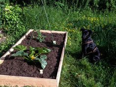Bauerngarten anlegen, Beeteinfassung aus Holz selber bauen