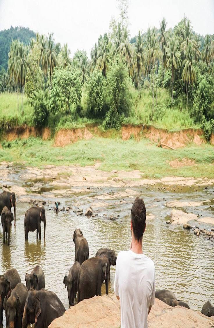 Guide: Pinnawala Elephant Orphanage