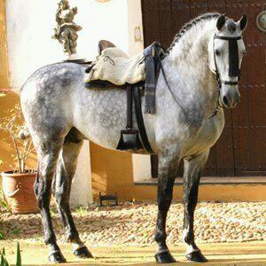 Baroque Horse