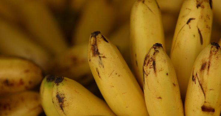 Cómo hacer glaseado de crema de banana. El glaseado de crema de banana es una buena cobertura para los pasteles de chocolate, pasteles blandos y pasteles de banana; úsalo como cobertura de magdalenas y tartas también. Además es una buena forma de usar esas bananas antes de que se echen a perder. Mantén a mano la receta para cualquier momento que quieras hacer un glaseado de sabor único ...