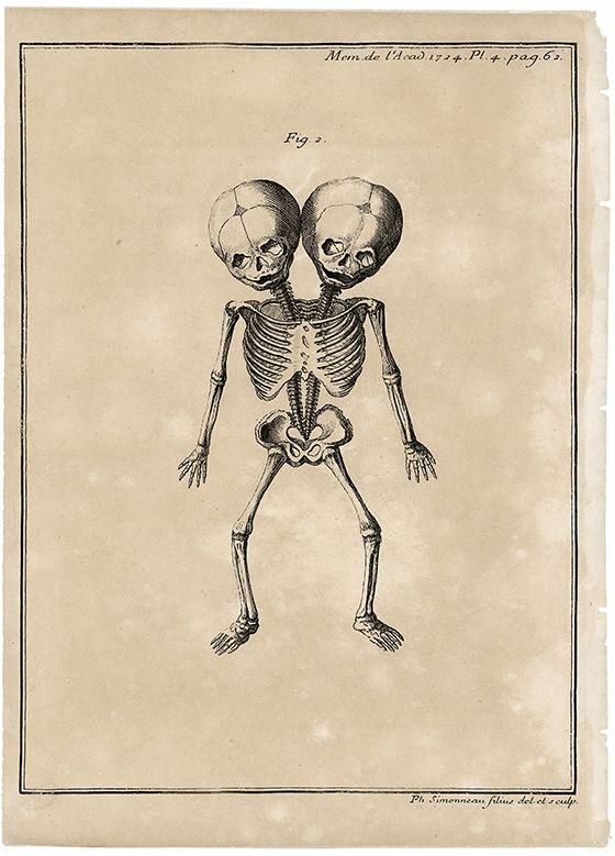 Antique Anatomy