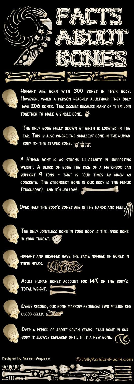 Here's a nice little infographic on bone facts. Many of the facts are well known but there are a few that may surprise you. Have a read. How many did you