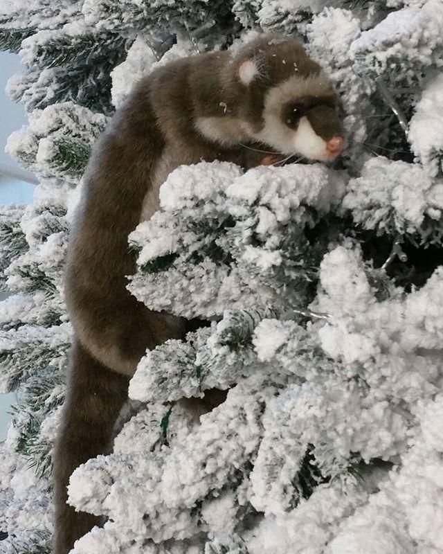 #marders #marder #tier #kalt #winter #percygermany #wald #schnee #schneee #snow #sweet #nerz #raubtier www.PercyGermany.com