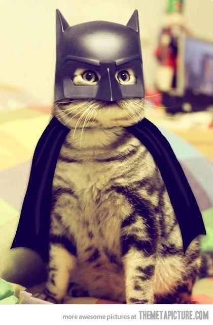 Batcat…nananananna