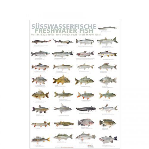 Poster Süßwasserfische