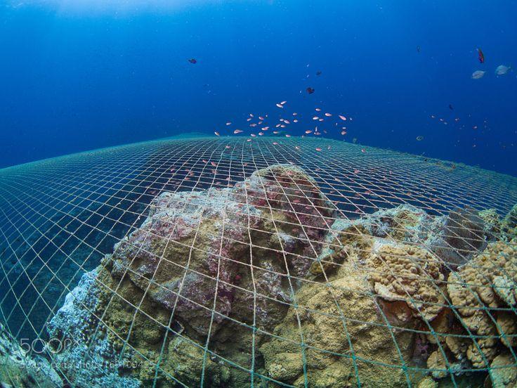 Ghost Net by diverstef