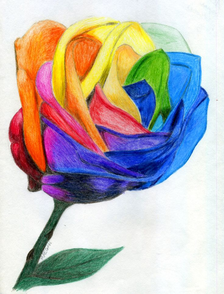 Multi color multi color rose multi color pinterest for Dual color roses