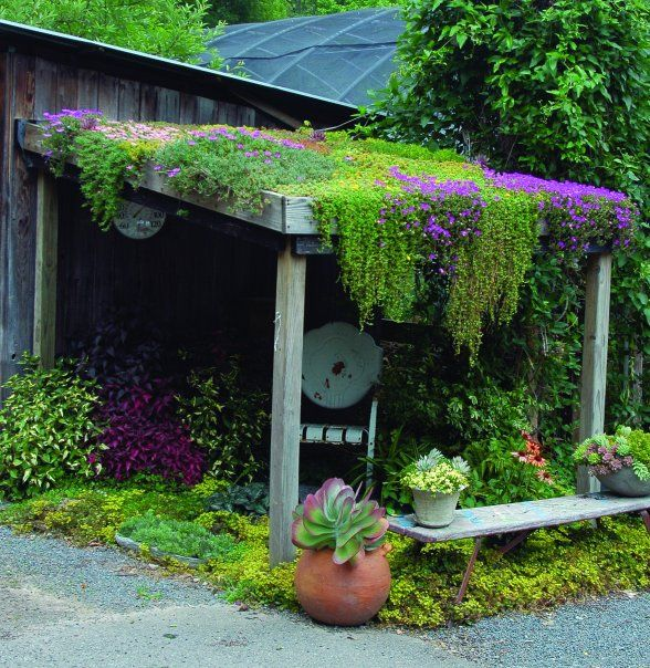 . Hardy succulents like sedums, semperveriums, and ice plants are ideal for roof gardens, they require little soil and water, and can take long periods with not much watering..