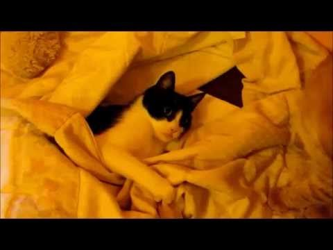 CATS PLAYNG HIDE AND SEEK; Maia and Gaspare :) - YouTube