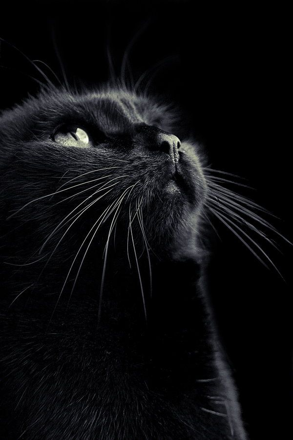 Photograph Black by Tim Forbrig on 500px - Enchanting photo of beautiful black cat