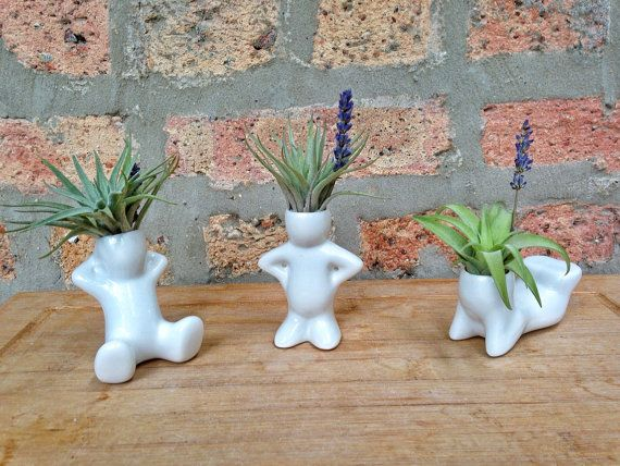 Air Plant Buddies These little guys are by lovelyterrariums