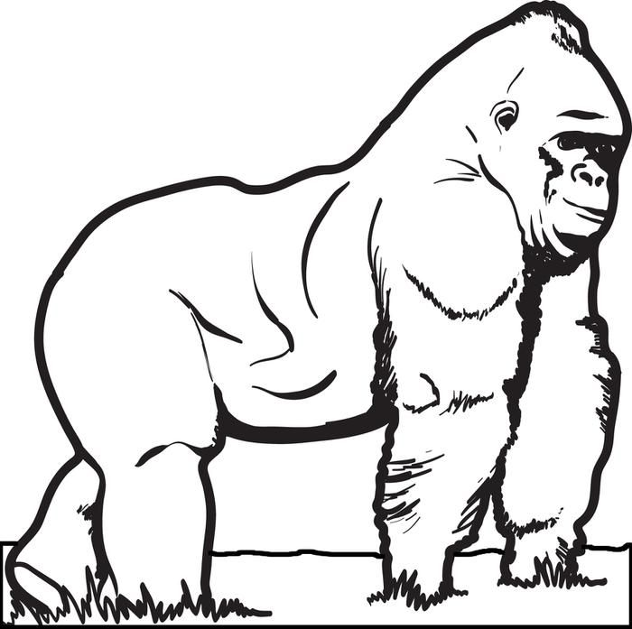 Gorilla Coloring Page | school ideas | Coloring pages, Animal ...