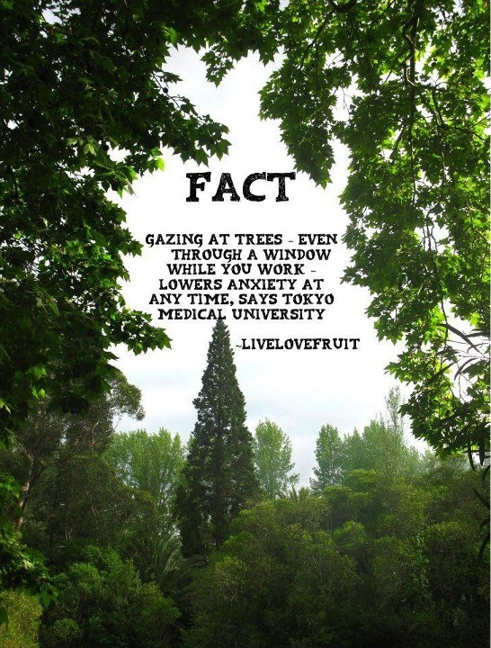 trees our friends Essay on trees our best friend - put out a little time and money to get the dissertation you could not even imagine find out common tips how to get a plagiarism free themed research paper.