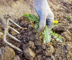 Les mauvaises herbes vous embêtent ? Si c'est le cas, voici quelques conseils utiles pourfabriquer son désherbant naturel respectueux de l'environnement pour votre potager. Vous avez besoin seulement d'eau, vinaigre et une poignée de gros sel ... Pour se débarrasser des mauvaises herbes, sou…