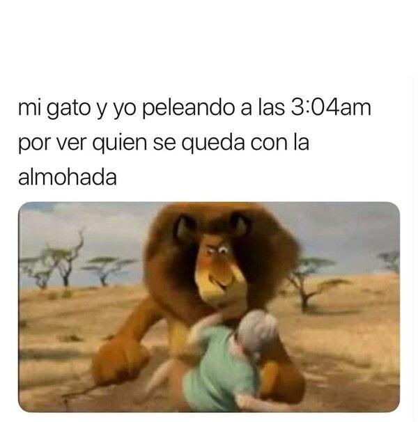 Memesespañol Chistes Humor Memes Risas Videos Dbz Memesespaña España Ellanoteama Rock Memes Love Vi Memes Divertidos Meme Gracioso Meme Divertido