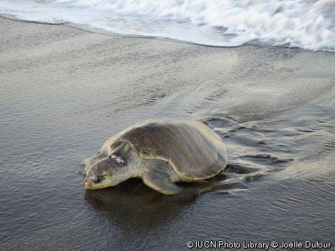 Gkillcity: Lo que nos enseñaron las tortugas marinas | Imperios del Gonza