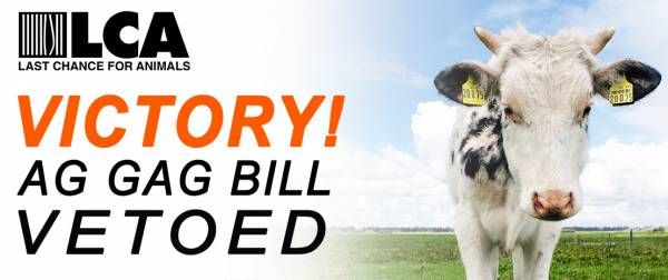 VICTORY: Missouri Ag Gag Bill Vetoed by Governor Jay Nixon! > http://www.lcanimal.org/index.php/blog/entry/victory-missouri-ag-gag-bill-vetoed-by-governor-jay-nixon